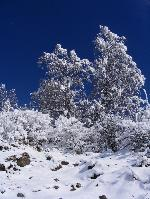 Înveliºul alb al iernii