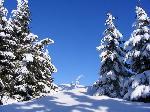Ornamente de iarnĂŁ