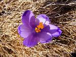A venit primĂŁvara
