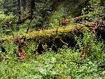 În pãdure