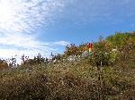 Vf.MĂŁgura Codlei 1292m - 4 octombrie 2014