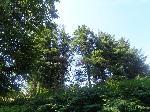 Pomi (Muntii Aninei) - poteca Lac Buhui