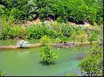 Râul Cerna