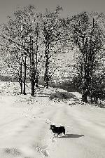 Lost (iarna in Muntii Cernei)