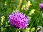 Macro flora Bucegiana