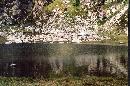 lacul iezer din muntii rodnei,vara 2003