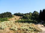 Plaiul Recii-aproape de Piscu Putului