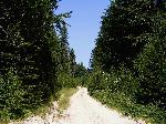 Muntele Plesa, partea de est. Drumul spre muntele Buciumu
