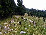 ,,Comitetul de primire...'' de pe muntele Voisanu - Parang