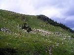 Turma de oi pe Cracul Gaurilor