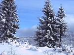 Iarna pe Netedea
