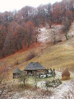 Casa de la tara (2)