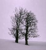 Povestea copacilor fara padure