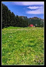 Murmur, zumzet de albine, Pajisti de petale pline, Culori, gandul sa-mi aline, Ratacind spre zari alpine...