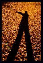 Rayen si frunzele de aur