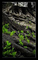 Natura - Despre viata si moarte