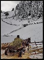 Goana printre greutatile iernii