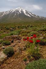 Vedere spre versantul nordic al Demavendului (de la cca. 3000 m.)