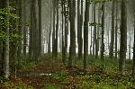 Pãdurea vrãjitã (sub Câmpul Însorit / Nagy Vérofeny)