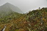 Parque Podocarpus - Pe traseul Los Miradores