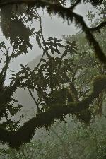 Parque Podocarpus - La coborârea spre refugiu