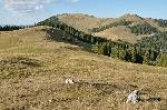 Vf. Țapul Mare vĂŁzut din apropierea Vf. Iedu (M. ȚibĂŁu)