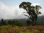 Mount Cameroon - la lizierã, mergând spre Cabana Fako