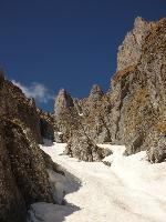 La deal pe Valea Bucșoiului.