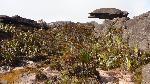 'Țestoasa zburĂŁtoare' - pe platoul suspendat din Roraima