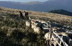 O noua zi pentru ciobanul Niculita