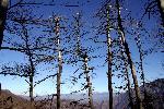 Fagarasul printre pomi
