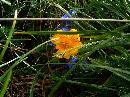 Floricică pe Vânătoarea lui Buteanu