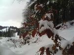 Toamna si iarna