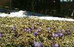 Primavara- iarna