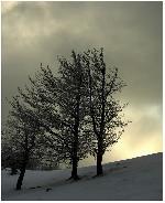 Din vremea cand inca mai ningea - decembrie 2005