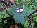 La odihna pe o frunza de urzica dimineata in Valea Rea