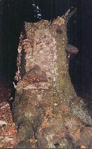 Sfinxul din P.Craiului sau ciudateniile naturii aproape de marele grofotis