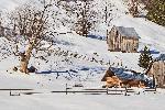 Caprioare prin Rarau #bucovinafotogenica #neamtulfotogenic