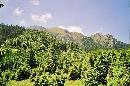 Bucsoiul, vazut din Poiana Pichetul Rosu