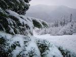Iarnaaa...