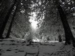 PĂŁdurea fermecata