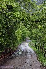Drumul catre Cheile Rametului