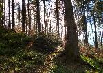 Iarna... prin pĂŁdure...